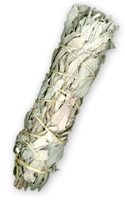 White Sage Smudge Bundle Large - 8""