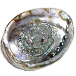 Abalone Shell - Whole, Large  - Size Varies 6-7