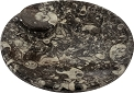 Ammonite Fossil Smudge Dish